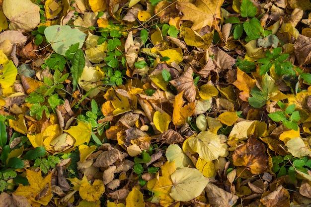 Kolorowe tło jesiennych liści. liście żółte, zielone, pomarańczowe i brązowe.