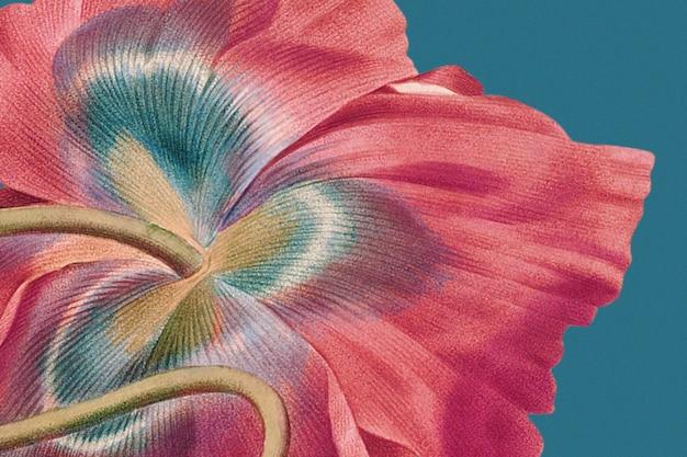 Kolorowe tło kwiatowe z ilustracją maku, zremiksowane z dzieł z domeny publicznej