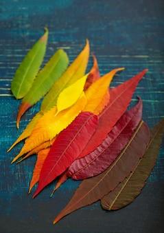 Kolorowe tło liści jesienią. paleta jesiennych liści