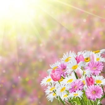 Kolorowe tło wiosna z pachnącymi kwiatami