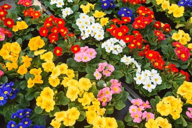 Kolorowe tło z ogrodu kwiatów i jagód, widok z góry.