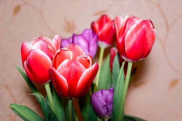 Kolorowe tulipany na białym tle zbliżenie. pąki tulipanów na zielonej łodydze. natura.