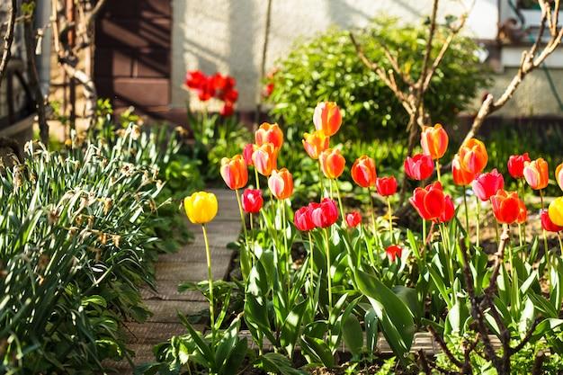 Kolorowe tulipany na kwietniku