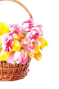 Kolorowe tulipany w koszu na białym tle