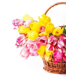 Kolorowe Tulipany W Koszu Na Białym Tle Premium Zdjęcia