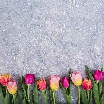 Kolorowe tulipany w rzędzie