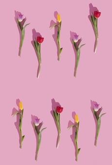 Kolorowe tulipany wzór na pastelowym tle kreatywna miłość leżała kopia przestrzeń