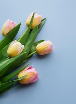 Kolorowe wiosenne tulipany na niebieskim tle