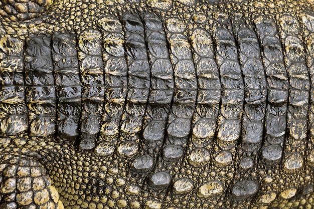 Kolorowe wzory i skóra krokodyla w tle.