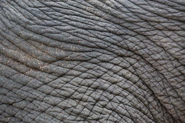 Kolorowe wzory i skóra słoni