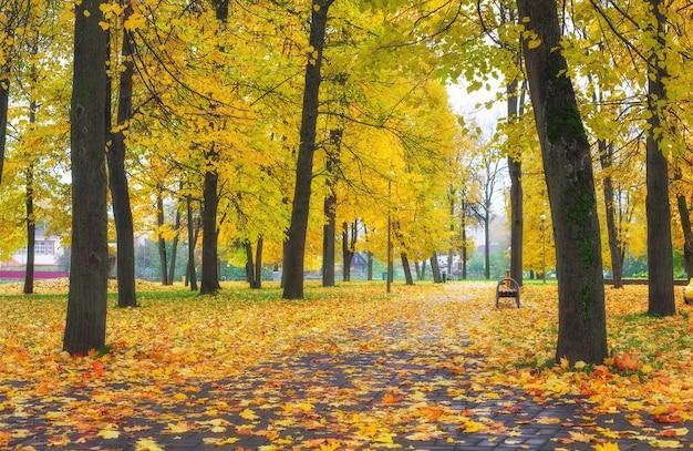 Kolorowe złote liście w jesiennym parku. piękne wysokie drzewa. kompozycja natury