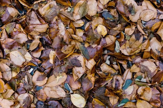 Kolorowego brązu brązu mokrzy jesień liście. naturalne stonowane tło