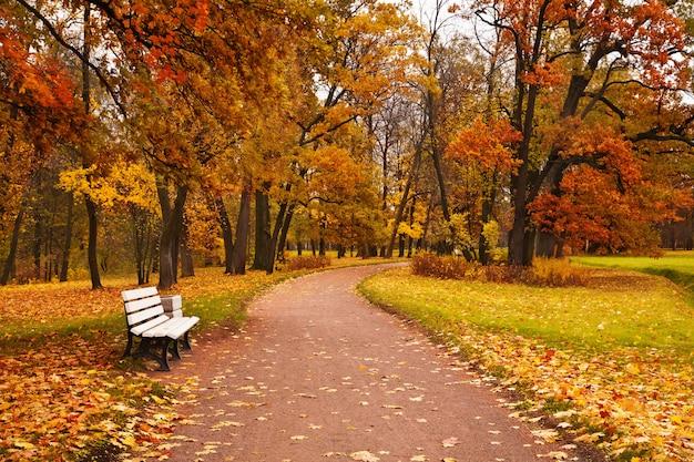 Kolorowej jesieni klonowi drzewa spadać opuszczają ścieżki ławkę w parku