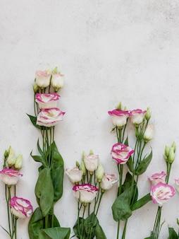 Kolorowi kwiaty na białym betonowym tle. sezonowa naturalna granica na wiosnę i lato. widok z góry, obraz pionowy, miejsce