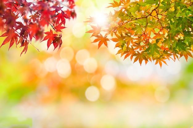 Kolorowi liście w jesień nastroju z rozmytym tłem