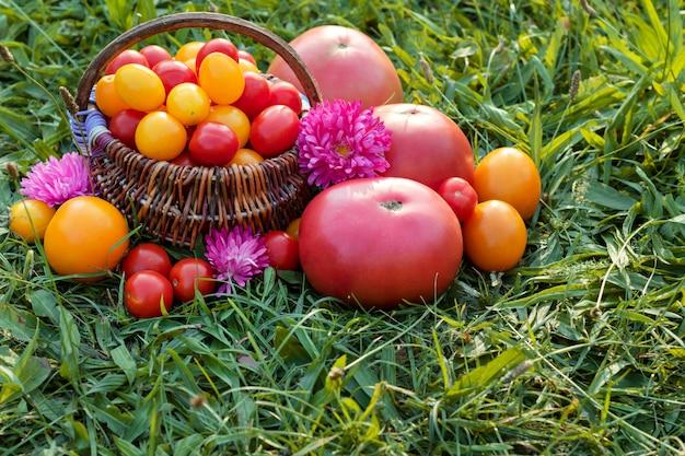 Kolorowi pomidory, czereśniowi pomidory w koszu na trawie. miejsce na tekst.
