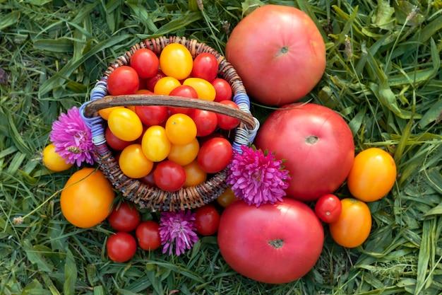 Kolorowi pomidory, czereśniowi pomidory w koszu na trawie.