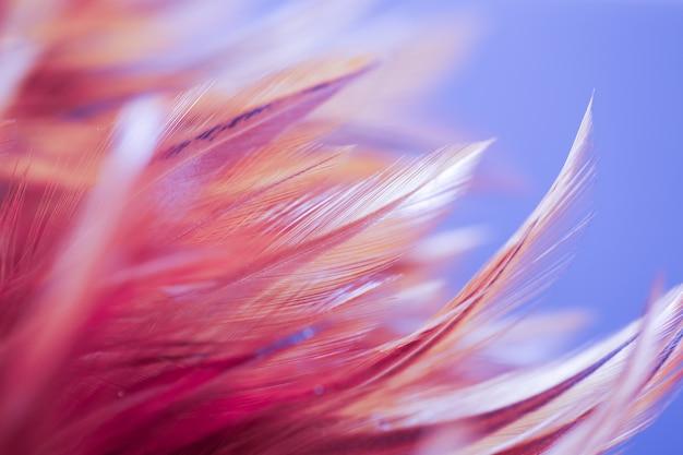 Kolorowi ptaka i kurczaka piórka w miękkiej części i zamazują styl dla tła, abstrakcjonistyczna sztuka