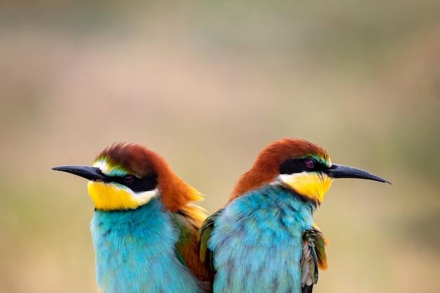 Kolorowi ptaki na gałąź