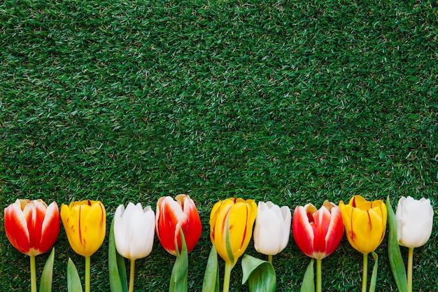 Kolorowi tulipany na zielonej trawie