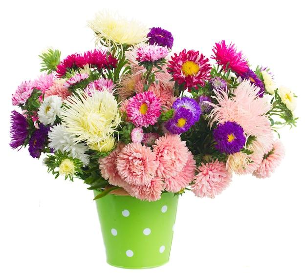 Kolorowy bukiet kwiatów aster w zielonej doniczce na białym tle