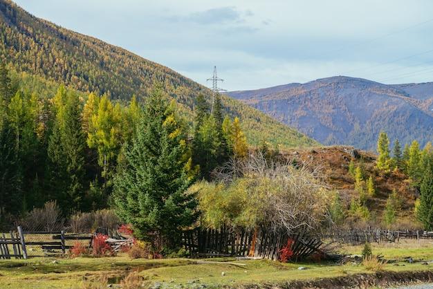 Kolorowy górski jesień krajobraz z drzewami iglastymi w pobliżu drewnianego ogrodzenia w promieniach słońca. jasna alpejska sceneria z drzewami i roślinami w żółto-czerwonych jesiennych kolorach. las na wzgórzach i górach jesienią.