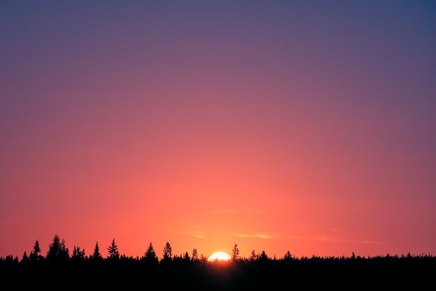Kolorowy gradient przy wschodem słońca i lasową sylwetką
