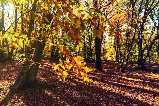 Kolorowy jesienny krajobraz leśny