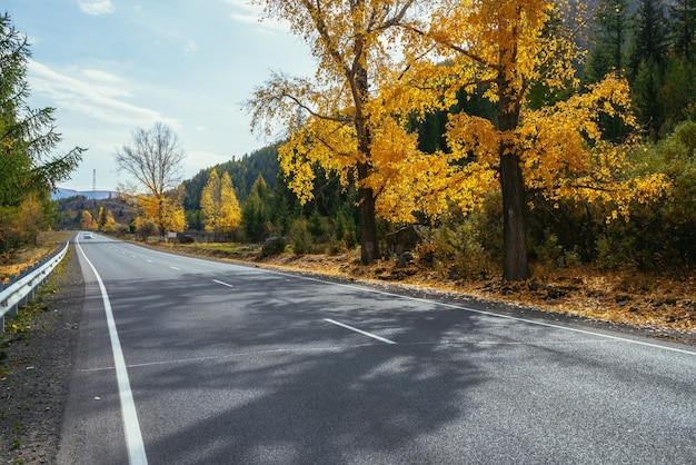 Kolorowy jesienny krajobraz z brzozy z żółtymi liśćmi w słońcu w pobliżu górskiej autostrady. jasna alpejska sceneria z samochodem na górskiej drodze i drzewami w jesiennych kolorach. autostrada w górach jesienią