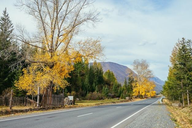 Kolorowy jesienny krajobraz z brzozy z żółtymi liśćmi w słońcu w pobliżu górskiej autostrady. jasne alpejskie krajobrazy z górską drogą i drzewami w jesiennych kolorach. autostrada w górach w czasie jesieni.