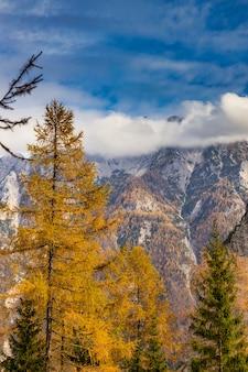 Kolorowy jesienny krajobraz z modrzewiami, górami i błękitnym niebem, słowenia