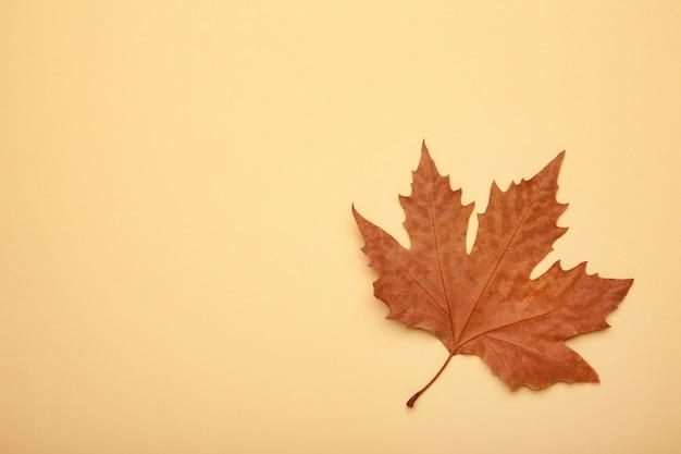 Kolorowy jesienny liść klonu na beżowym tle z miejsca na kopię.