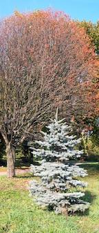 Kolorowy jesienny park we lwowie (ukraina). zdjęcie złożone z czterech ujęć.
