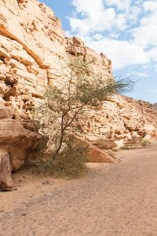 Kolorowy kanion z czerwonymi skałami. egipt, pustynia, półwysep synaj, dahab.