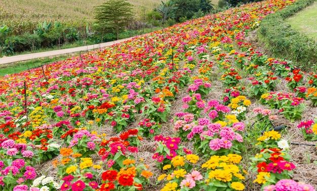 Kolorowy kwiat w ogródzie