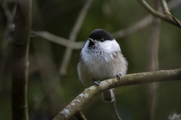 Kolorowy mały ptak siedzący na gałęzi drzewa