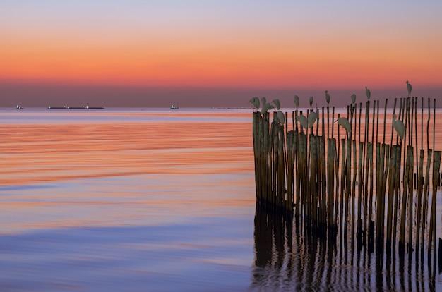 Kolorowy morze przy zmierzchem z ptakami na kijach