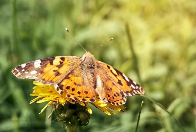 Kolorowy motyl na kwiatku.