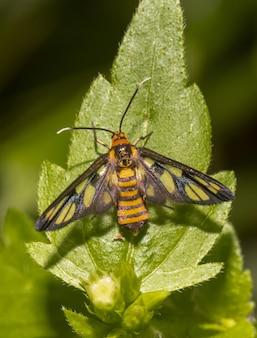 Kolorowy motyl na liściu z bliska