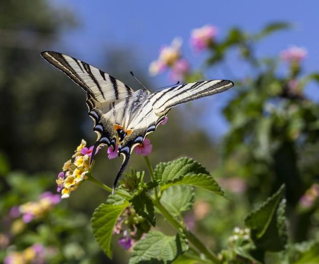 Kolorowy motyl siedzi na kwiatku