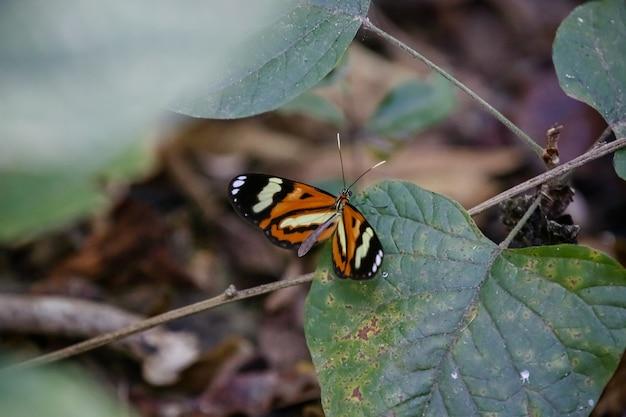 Kolorowy motyl w ogrodzie piękny na zielonych liściach