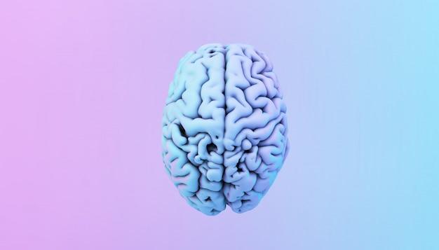 Kolorowy mózg