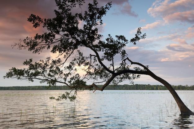Kolorowy niebo i kolorowa woda w jeziorze odbijał w wieczór