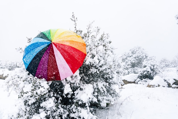 Kolorowy parasol porzucony na drzewie podczas opadów śniegu.
