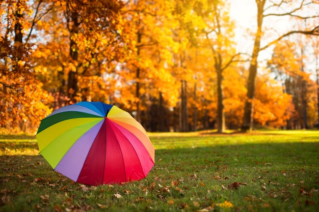 Kolorowy parasol tęczowy na trawie w parku jesienią