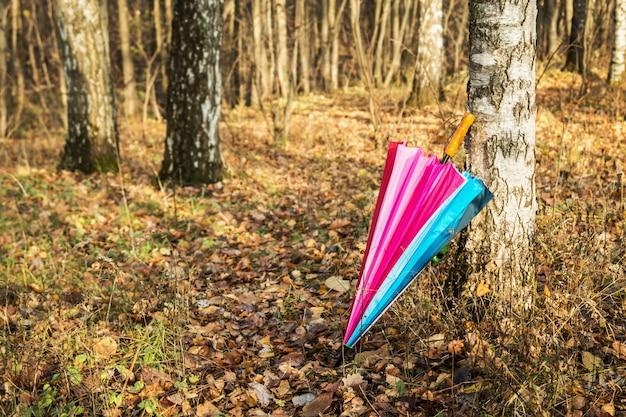 Kolorowy parasol w jesieni brzozy lesie