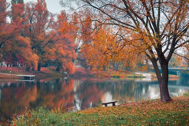 Kolorowy park jesień. jesieni drzewa z żółtymi liśćmi w jesień parku. biełgorod. rosja.