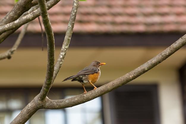 Kolorowy ptak na safari w kenii, ptak, kenia, dzika przyroda, safari, afryka, rezerwat, natura