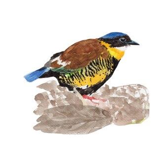 Kolorowy ptak rysowane ręcznie