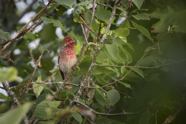 Kolorowy ptak siedzący na drzewie